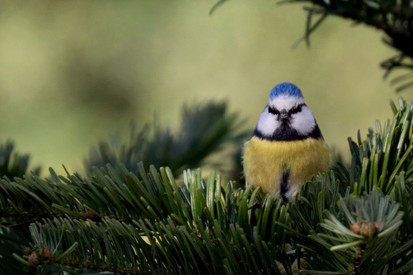 Bodo - Hüter des Waldes (09.03.19. Tiere Vögel)