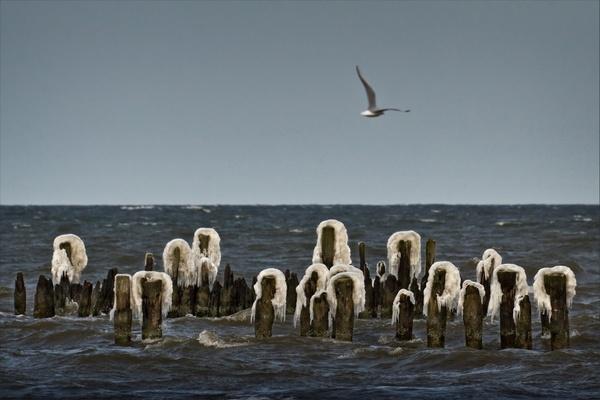 Eiskalte Meerjungfrauen