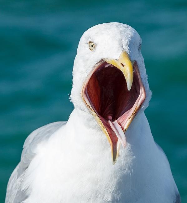 Ahhh!