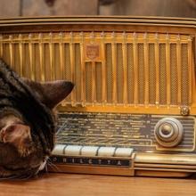Katzenmusik!