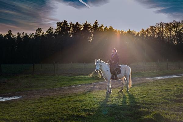 Reiter in der Abendsonne