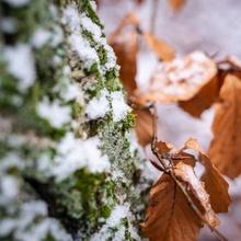 Der spärliche Schnee