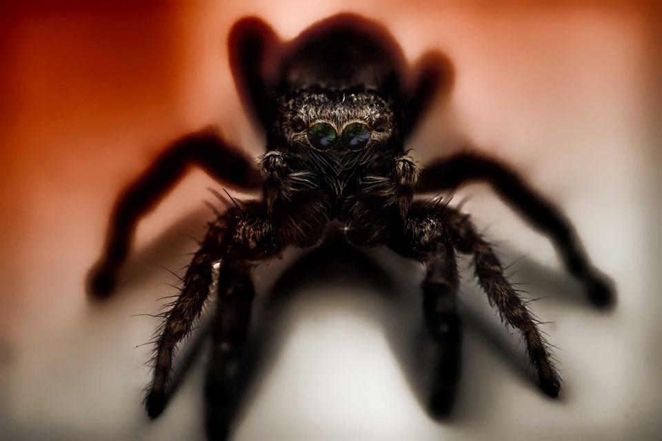 >>arachnophobia.<<