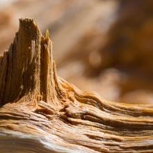>>piz hoiz -- mount wood<<