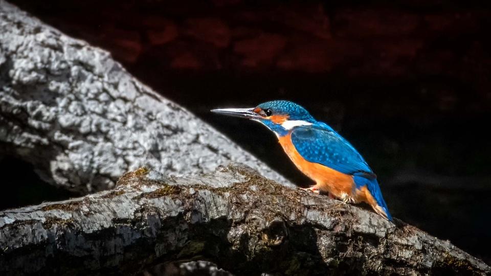 >>kingfisher.<<