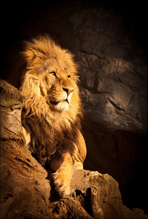 Seine Majestät