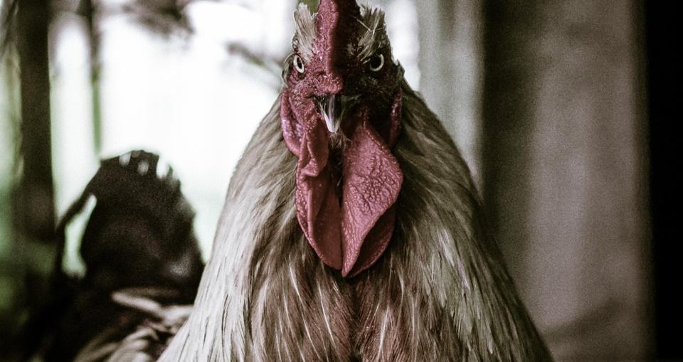 200 Eggs Reward - Dead or Alive