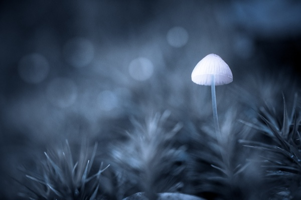 Moonlight Mushroom