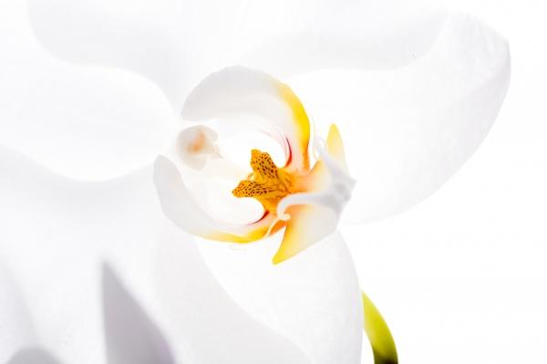 ...Blüten-Kunst...