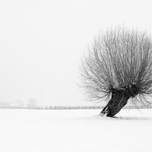 Mein Freund der Baum ...