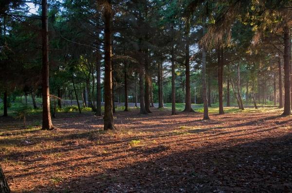 Tiefe Sonne am Waldrand