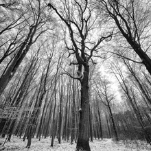 Winterwald - bitterkalt
