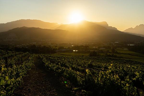 Die Sonne hinter Weinbergen