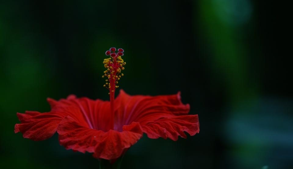 Sags durch die Blume...