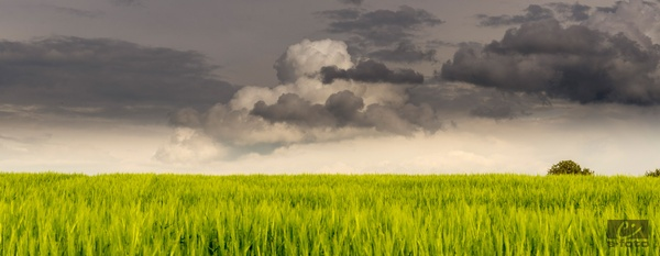 Wolken-Felder 1