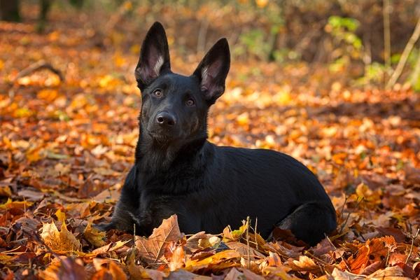 Große Ohren