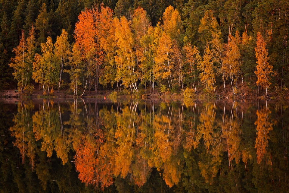 Maximum Autumn Mood
