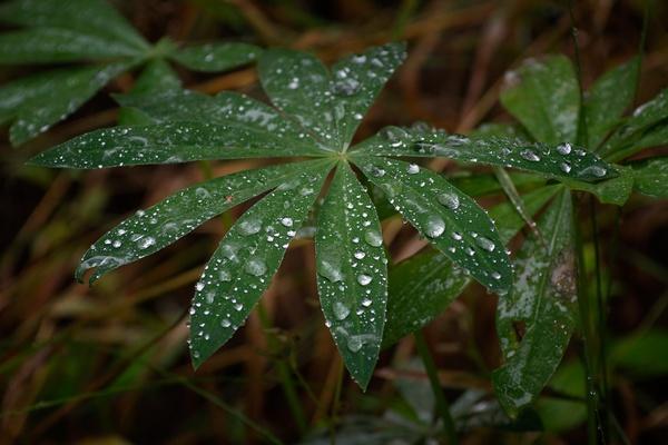 Regentropfenblues