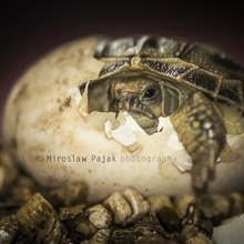 turtle is born...