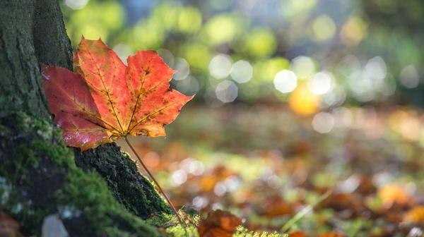 Es gibt eine Stille des Herbstes bis in die Farben hinein.