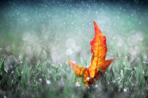 Zauberhafte Herbstankündigung
