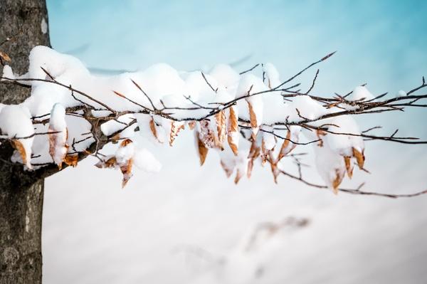 Erster Schnee auf letztem Laub