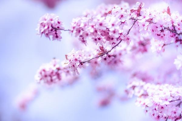 Licht des Frühlings