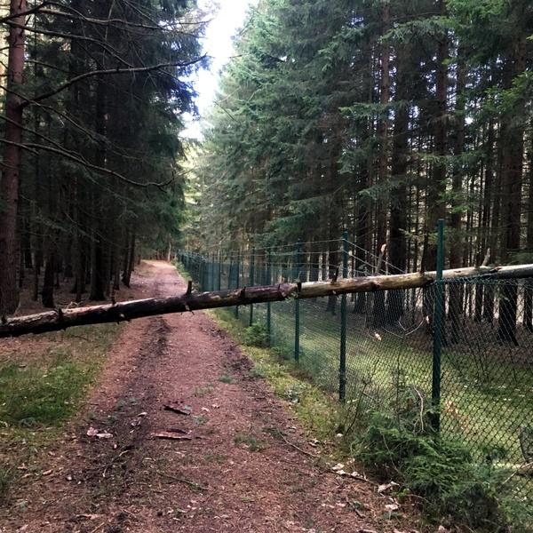Vom Baum gekreuzt