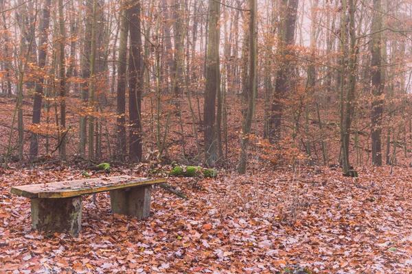 Blätter über Blätter