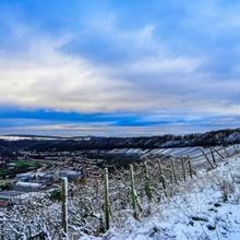 Schnee auf Weinberge