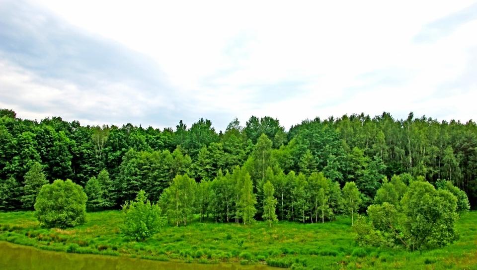 ....und grün ist der Wald...