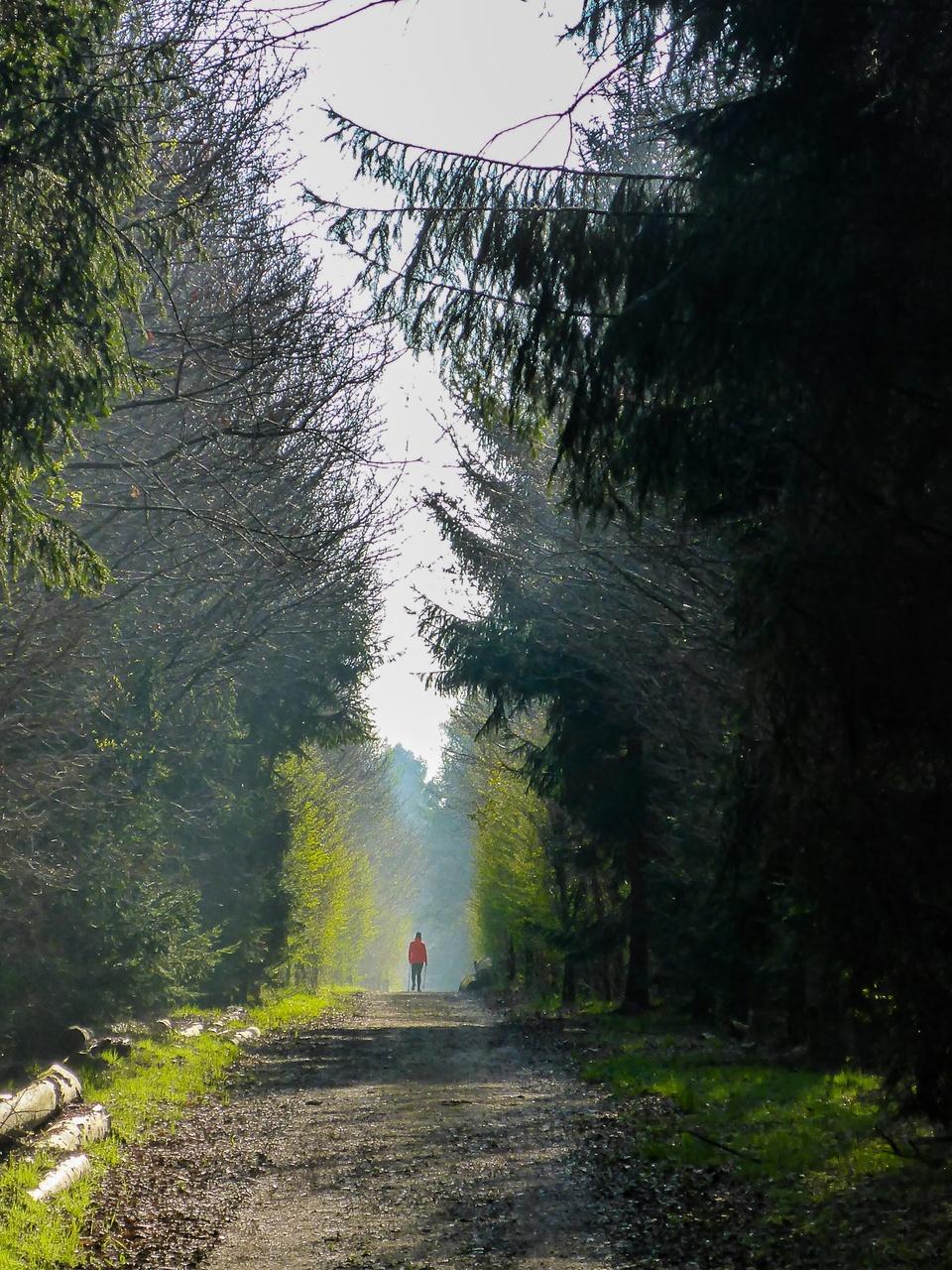 Waldpromenade