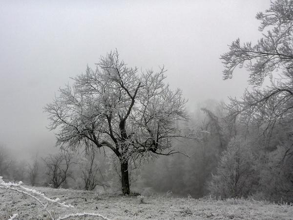 Gefrierender Nebel