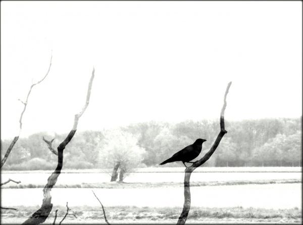 Die Landschaft und der Vogel