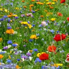 Meine bunte Blumenwiese