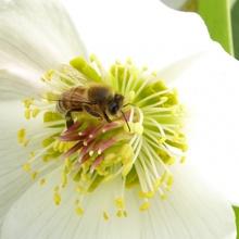 7.März...das erste Insekt 2021