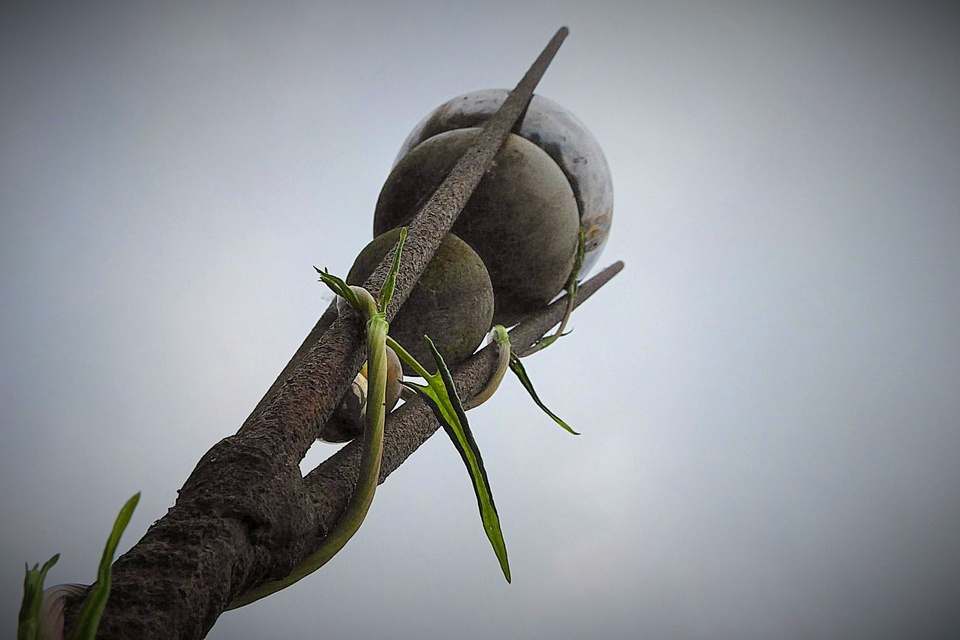 Objekt mit Schlingpflanze