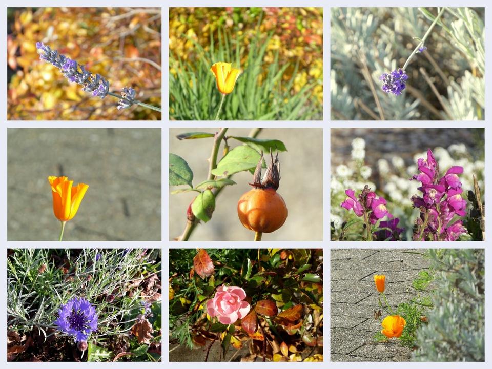 Advent im Garten