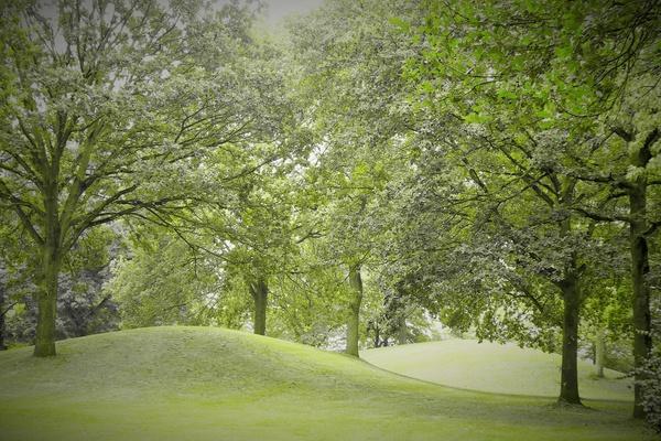 Reduziert auf Grün