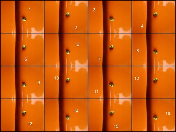 Ein Marienkäfer oder 2 X 8 = 16