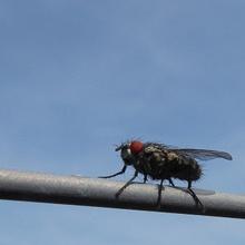 ...fliege Fliege in den Himmel