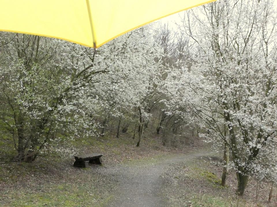 Leider Regen
