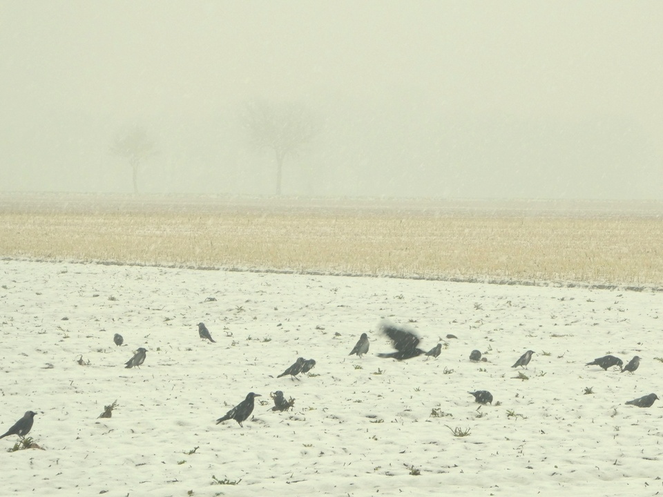 2.Februar am Niederrhein