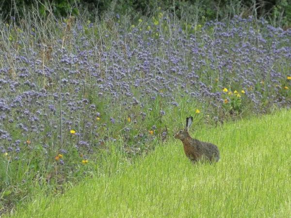 Schmackhaft.....rettet die Bienen mit Blühstreifen