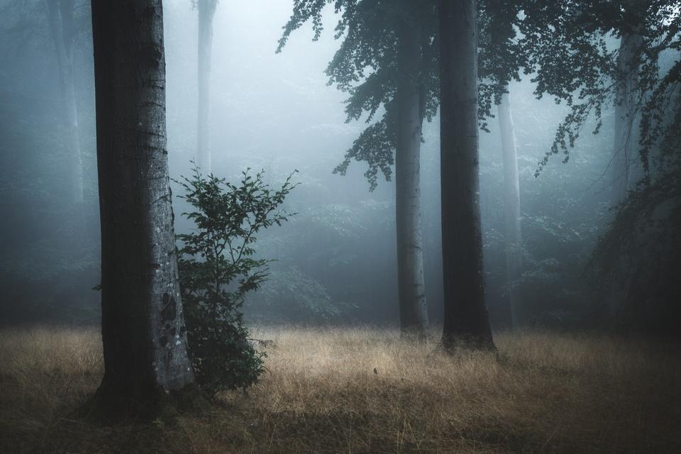 Morgengrauen im Wald