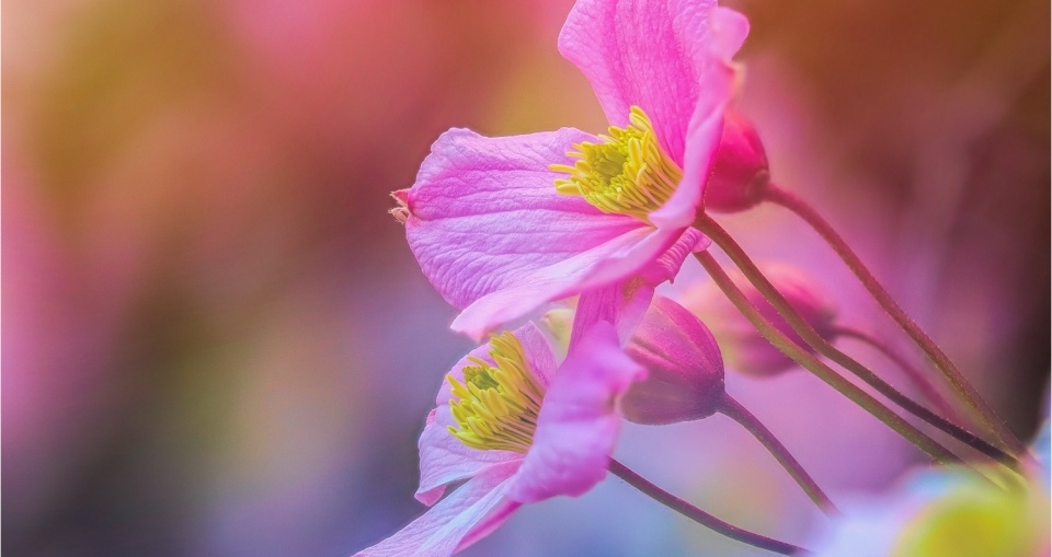 Farbrausch & Blütentraum