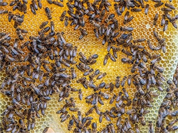 Streu-Obst-Wiesen-Bienen-Honig