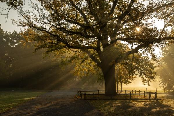 Morgennebel im Oktober