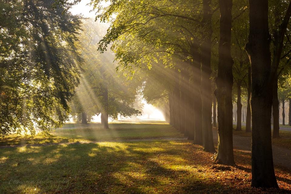 Bäume in der Morgensonne