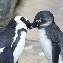 Frühlingsgefühle im Zoo Hannover